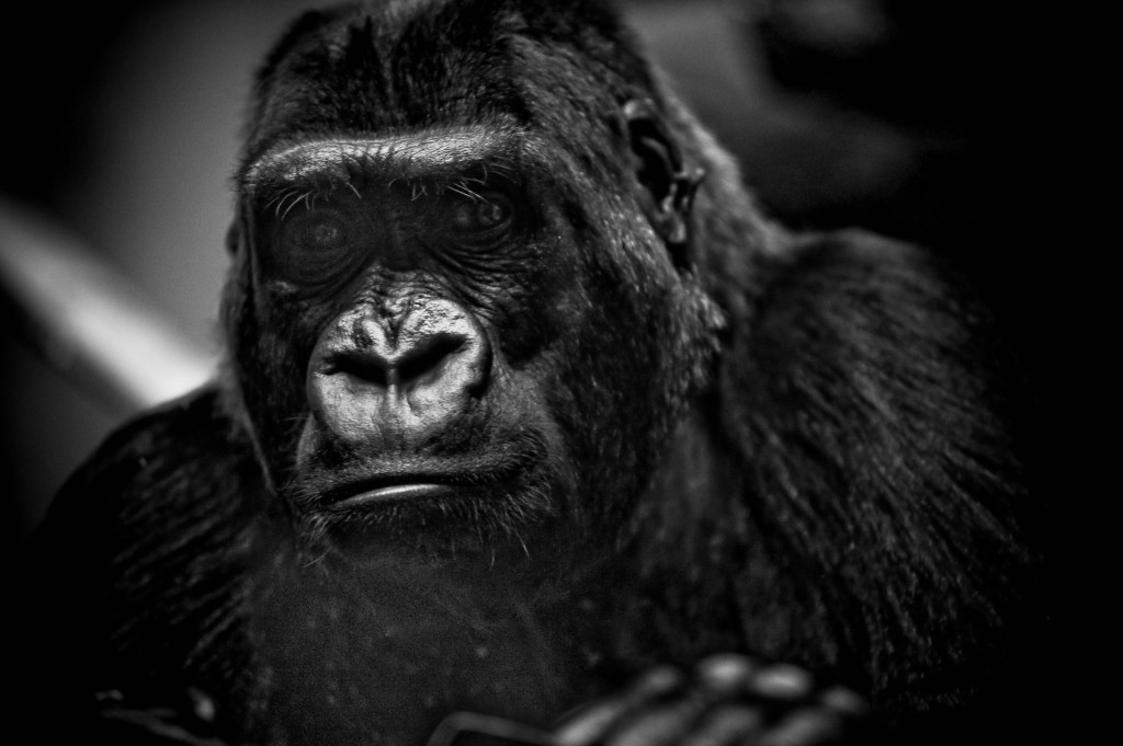 nick brandt fine art style photos 16
