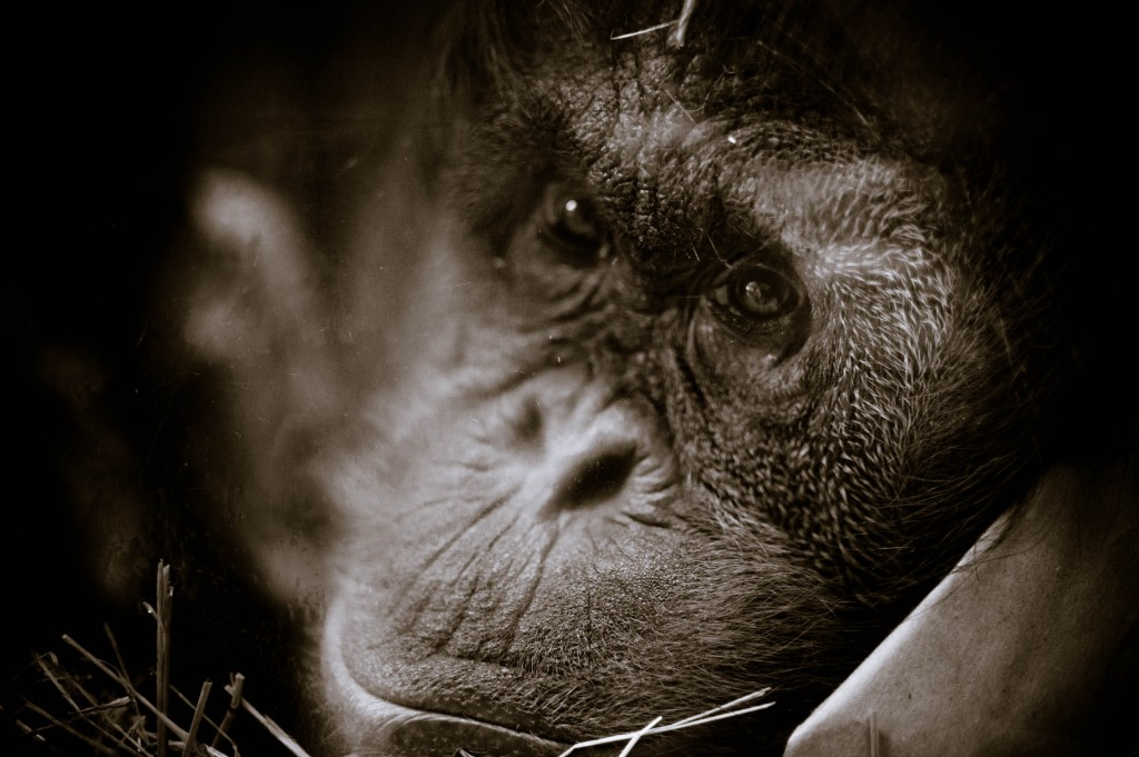 nick brandt fine art style photos 15
