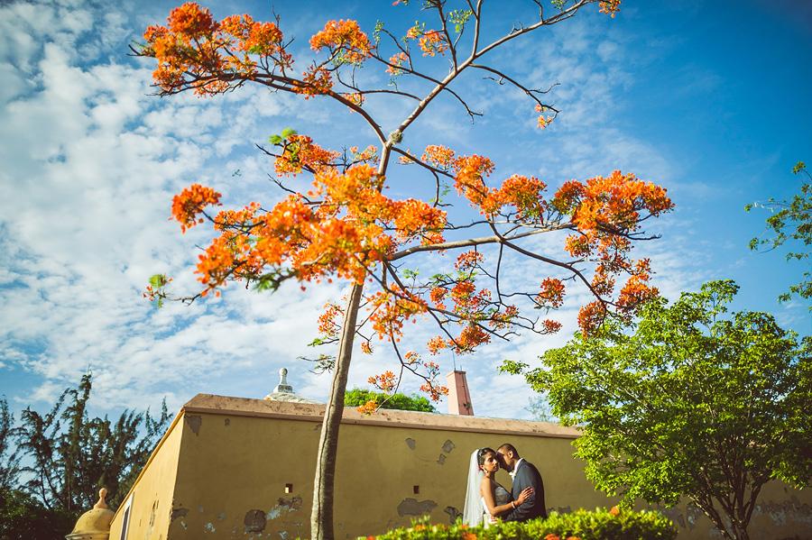 puerto rica wedding couple creative portrait with an orange tree