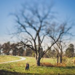 14-tree-tilt-shift-photograph-wedding