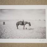 01-fine-art-print-horse