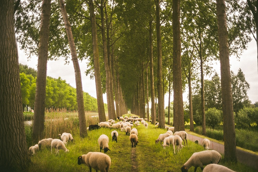 landscape photo of sheep in europe