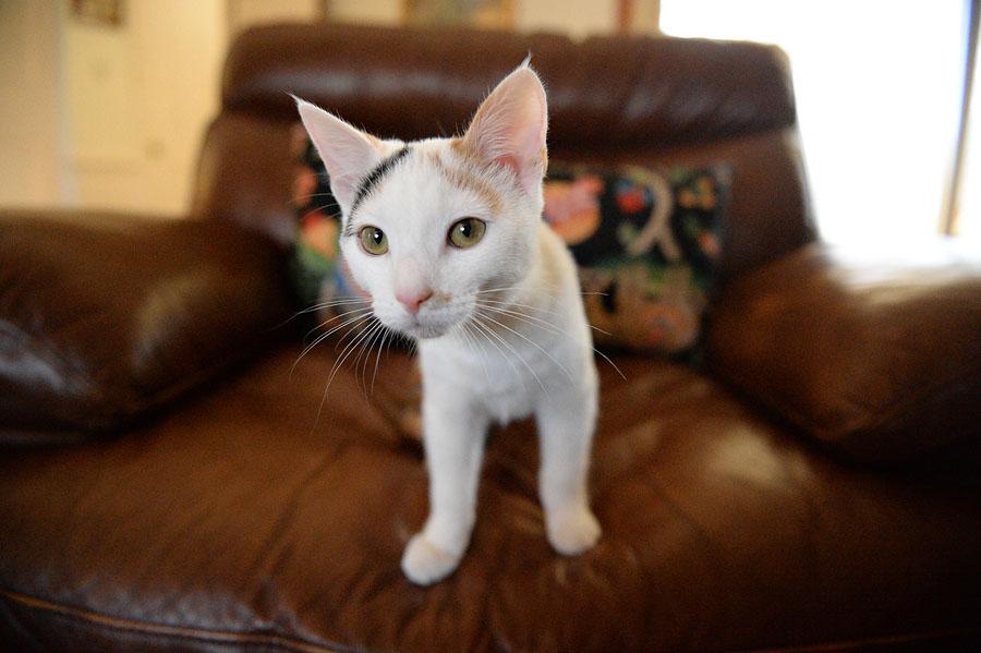 cat during nikon df review