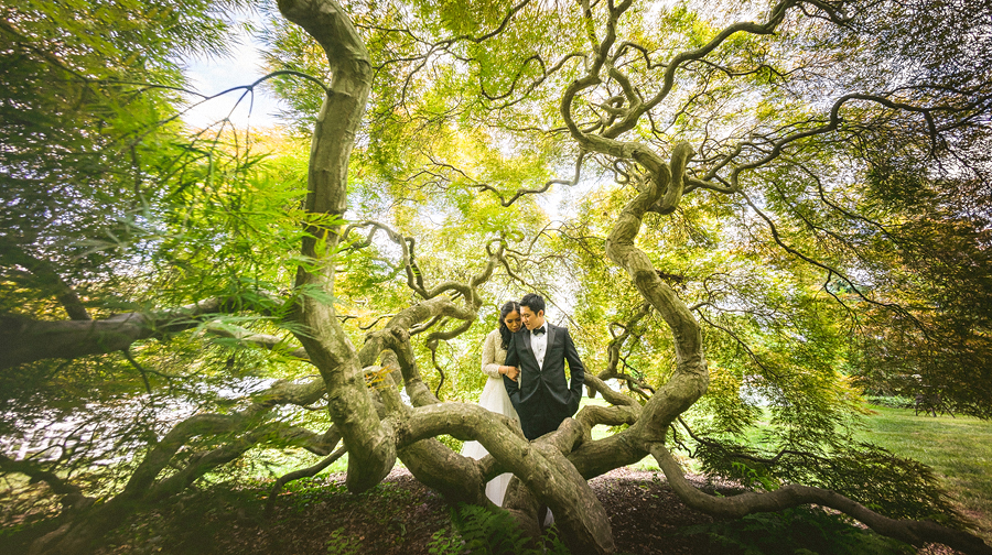 huge mapel tree with wide angle lens for bride and groom