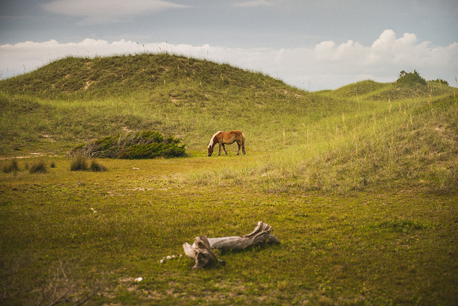 wild horse on harkers island park