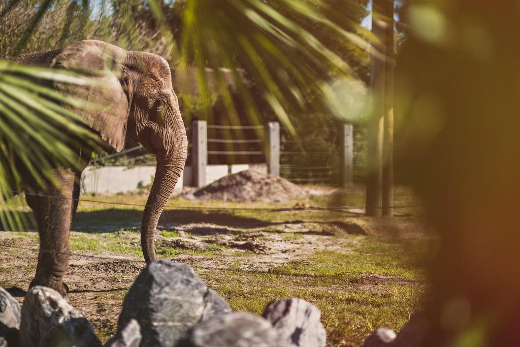 creative photo of an elephant