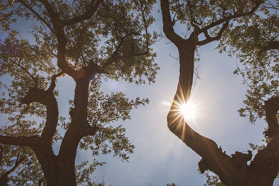 creative tree shot