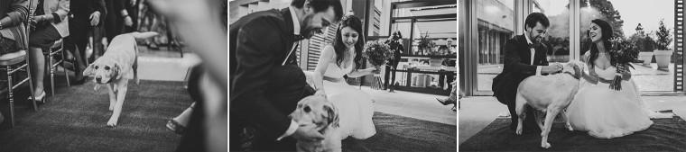 18 dog surprise ring barrer