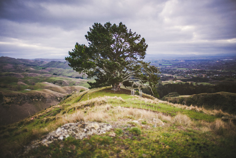 20 leica m-p airbnb trip through new zealand